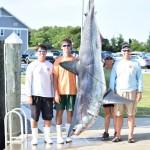 shark 7.19