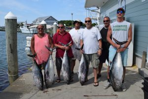 bluefin 7.3.16